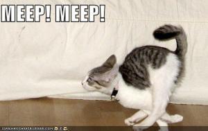 funny-pictures-speedy-cat